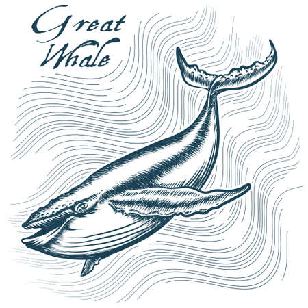 deep water: Great Whale in deep water. Engraving style. Only free font used.