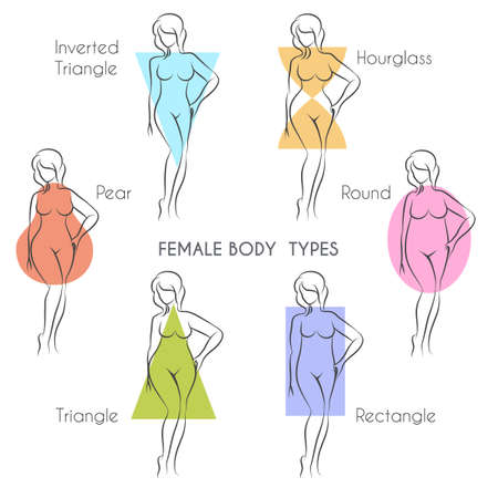 female body: Female body types anatomy. Main woman figure shape, free font used.