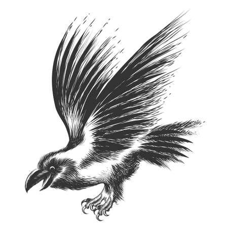Black Raven in Skizze Stil gezeichnet. Isoliert auf weiß.