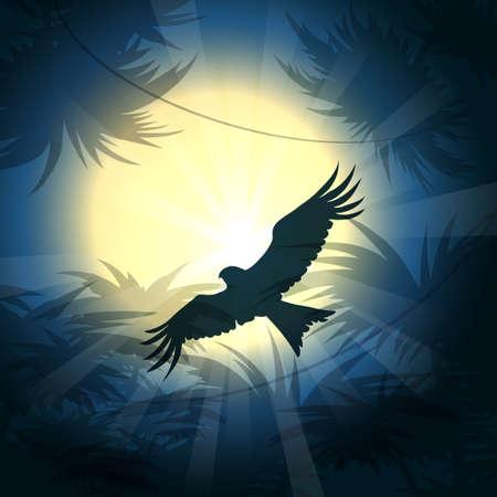 rain forest: Hunting nighthawk flies against full moon above rain forest.