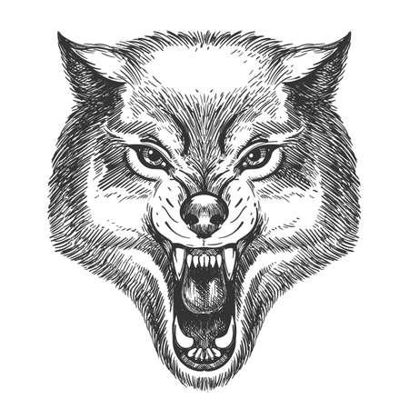 손으로 그린 늑대 스케치 스타일에서 머리. 화이트 절연 오픈 입 벡터 일러스트와 늑대.
