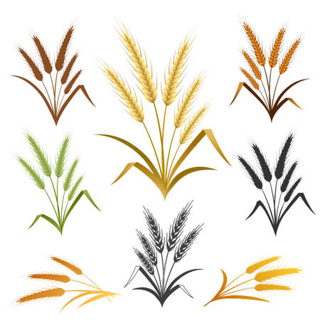 Wheat ears set. Bread logo or label design element. Vector illustration