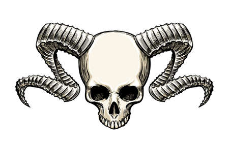 Human skull with ram horns drawn in sketch tattoo.