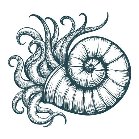 Hand drawn tentacles stick out of the sea shell in tattoo style. Vector illustration. Иллюстрация