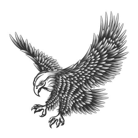 Flying Eagle emblem drawn in engraving style isolated on white. American symbol of freedom. Retro color of falcon. Vettoriali