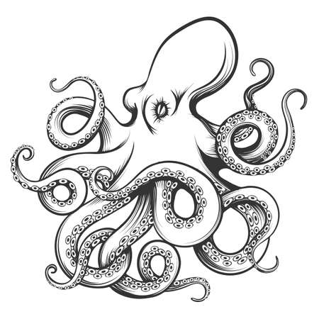 Octopus drawn in engraving style. Isolated on white background. Vector Illustration. Vectores