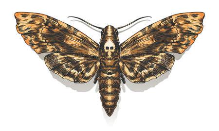 Hand gezeichneter Todeskopf Hawkmoth. Vektor-illustration Vektorgrafik
