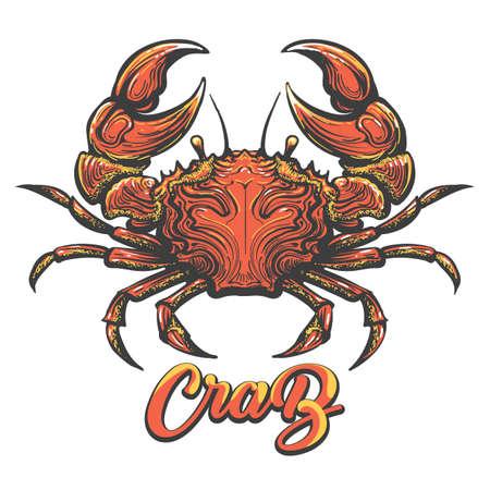 Colorful crab sketch vector illustration. Vectores