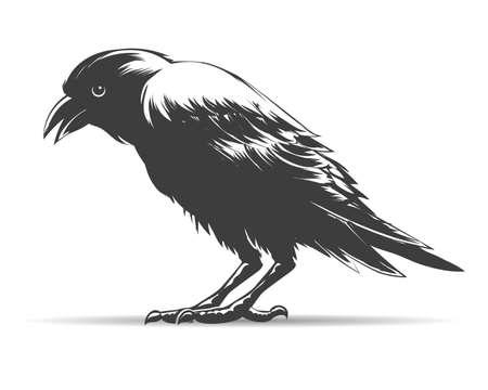 Corbeau dessiné à la main isolé sur blanc. Illustration vectorielle.