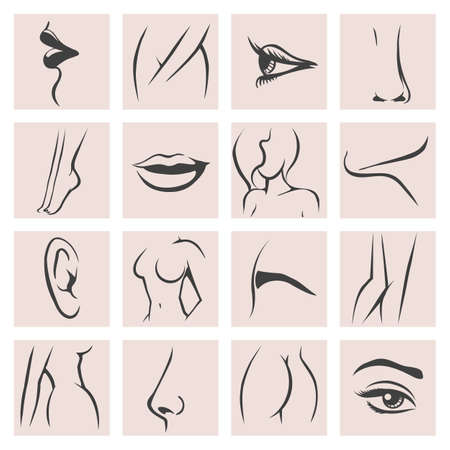 Female body parts icons set. Femininity fashion contour beauty, knee and ass, hand and foot, lip and mouth. Vector illustration Çizim