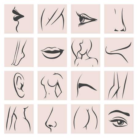 Weibliche Körperteile Icons Set. Weiblichkeitsmode konturieren Schönheit, Knie und Arsch, Hand und Fuß, Lippe und Mund. Vektor-Illustration