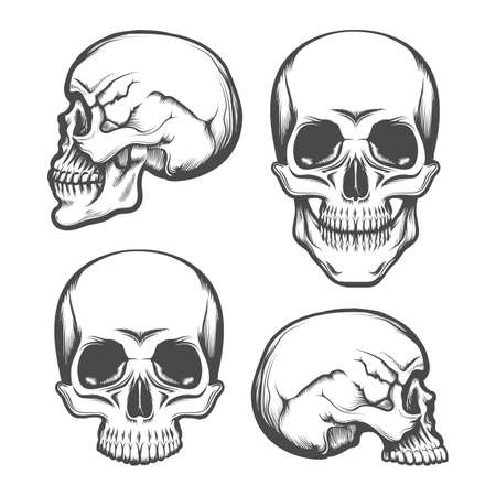Set of Human Skull  in Front and Side View. Vector illustration. Stock Photo