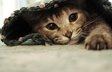 Spoiled cat Imagens