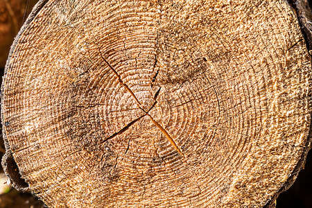 Cross section of a very old tree with tree rings. The demonstrative of age. Background texture image. Reklamní fotografie