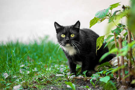 homeless cat hunts a bird in ambush, concept of help, protection of animals