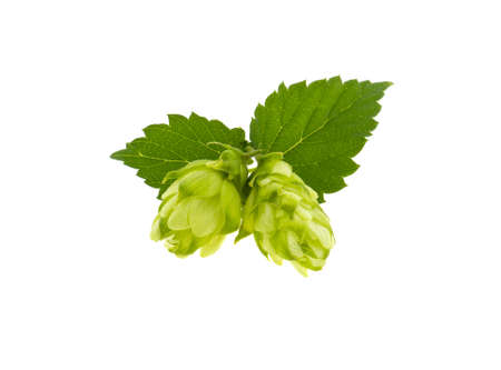hop bunch on white background