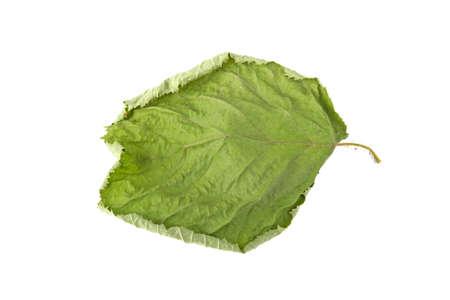 green sluggish leaf isolated on white background Imagens - 97009103