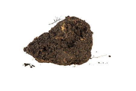 clump of earth on white background