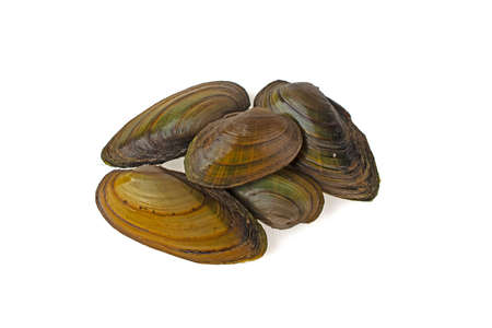 Mussel river on a white background