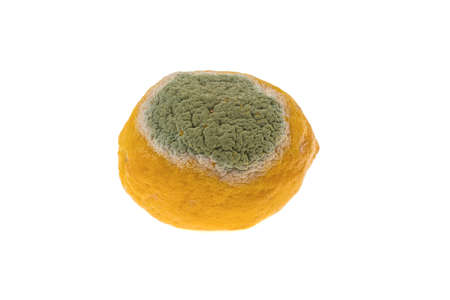 lemon with a mold, the concept of a spoiled product on a white background