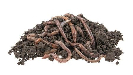 Earthworms in the ground, dirt on a white background, isolated.