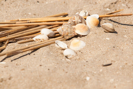 shells and straws in sand beach photo