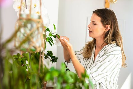 young woman taking care of the house plants, gardening, wipe of the leaves of the plants. Home activity for woman Stock Photo
