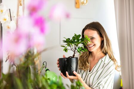 young woman taking care of the house plants, gardening. Home activity for beautiful young woman holding a bonsai in her hands near a bright window Stock fotó