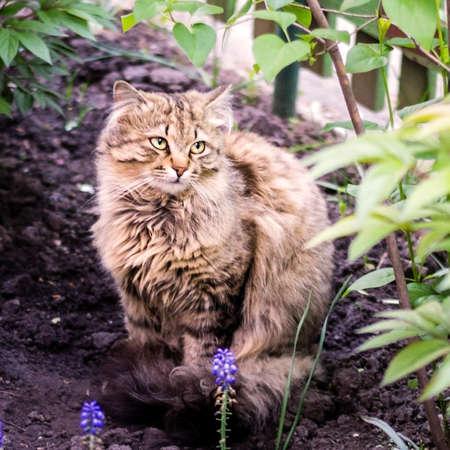 rudy: A sad, red fluffy cat sitting