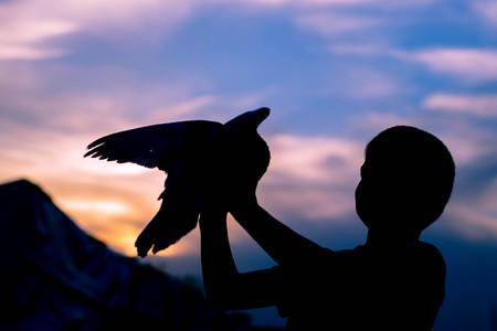 namaz: Silhouette of a boy holding a bird. Dove. Sunset sky. Stock Photo