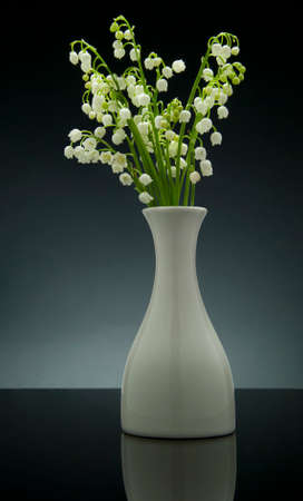 Lily of the valley on gradient gray background with reflection. Studio shoot photo