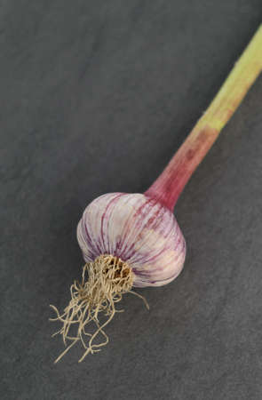 Green garlic detail on dark textured background. Selective focus. Depth of field. photo