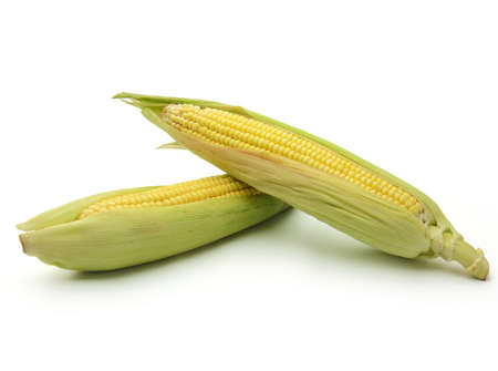 Ears of corn isolated on white background photo