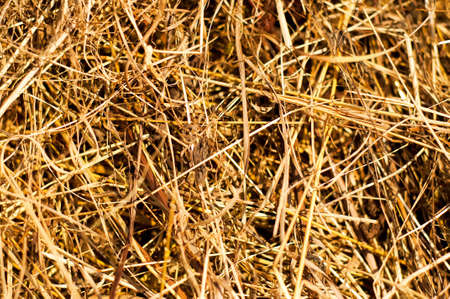 agro: Macro view of hay. Wonderful closeup of the texture.