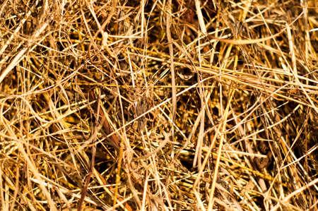 hayride: Macro view of hay. Wonderful closeup of the texture.