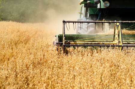 cosechadora: La recolección de la máquina en los cultivos de trigo Foto de archivo