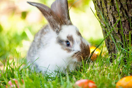 Easter bunny eating grass between colorful eggs  photo