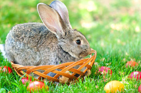 Easter little rabbit smiling while sitting in a easter egg basket surrounded by colorful eggs photo