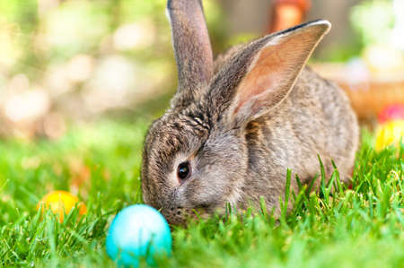 Easter little rabbit smiling in green grass with leaves, flowers and eggs background Stock Photo