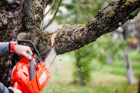 logger: man cutting trees using an electrical chainsaw and professional tools