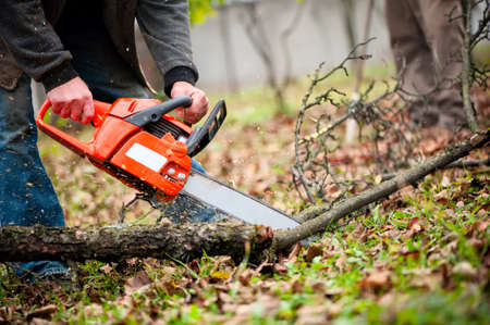 gasoline powered: man with gasoline powered chainsaw cutting fire wood from trees in forest Stock Photo