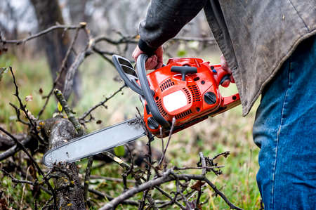 Lumberjack worker, a man cutting fire wood in forest with gasoline chainsaw