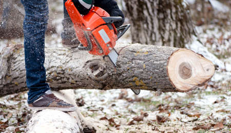 logger: Agricultural activities - Man cutting trees with chainsaw and tools in the garden during winter