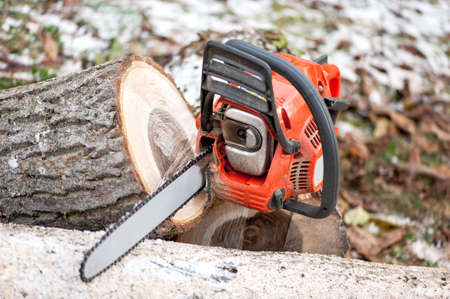 tree trimming: Gasoline powered chainsaw with tools and chopped trees against leaves and winter background Stock Photo