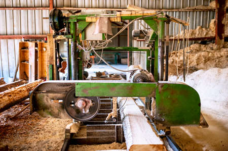 industrial wood production factory -  industrial big saw cutting trees photo