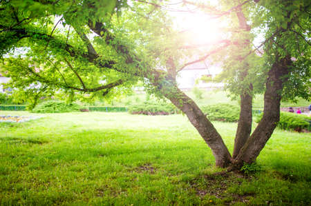 Beautiful summer landscape with a tree and sun rays in park  Tranquil background or wallpaper scenery with nature in park photo