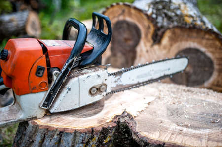 tree trimming: gasoline powered professional chainsaw on pile of cut wood, timber wood Stock Photo
