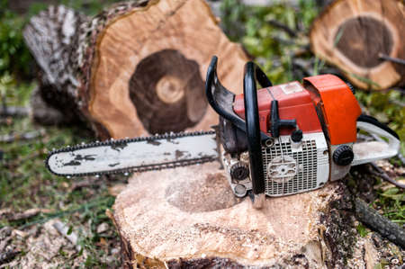 chainsaw on pile of cut wood and timber, lumberjack and sawdust