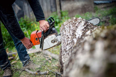 man with gasoline powered chainsaw cutting fire wood from trees in forest or garden photo