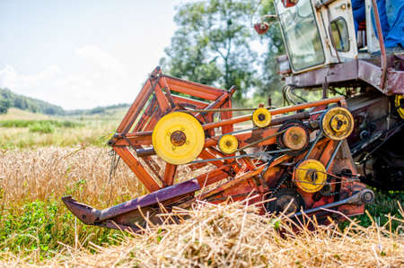 winnowing: agricultural activities with combine harvesting machine in wheat crops